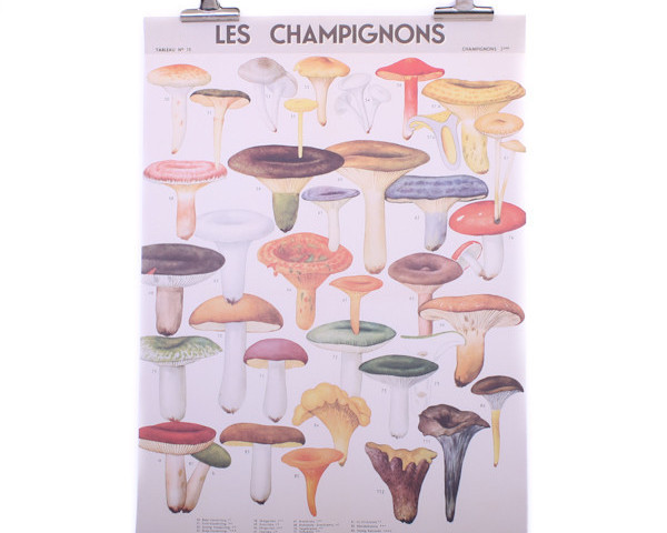 Cavallini Mushrooms Poster